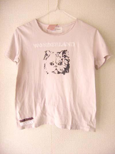 cat_T.jpg
